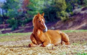 horse-3366434_960_720