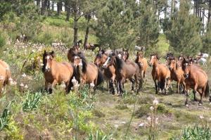 horses-3402950_960_720