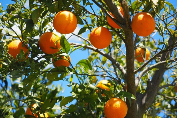 oranges-1117628_960_720