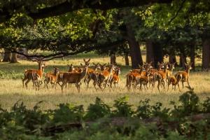 deer-2675484_960_720